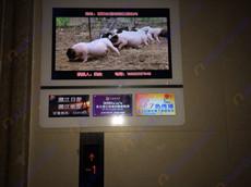 广东湛江日报社采购艾维图20台32寸一拖三广告机